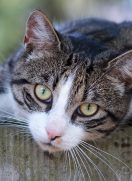 Chiropraktik bei Katzen