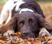 Chiropraktik bei Hunden